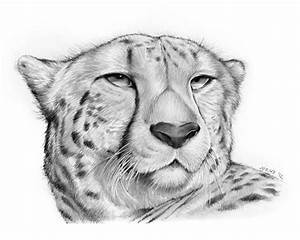 Unique Cheetah Drawings