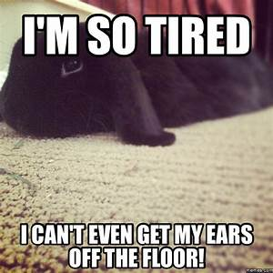 i'm so tired i can't even get my ears off the floor ...