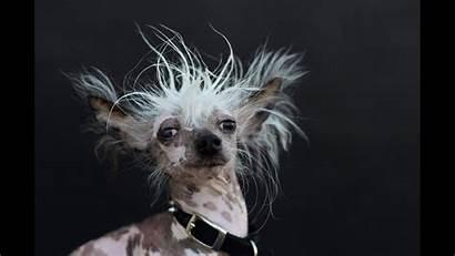 Dog Ugly Wallpapers Ugliest