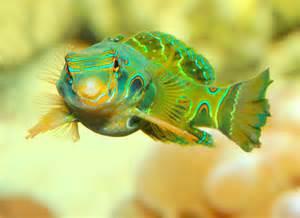 Exotic Saltwater Aquarium Fish