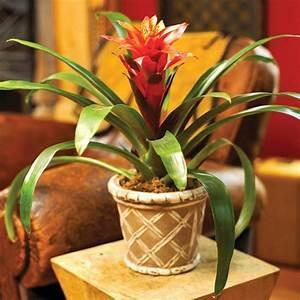 Blühende Zimmerpflanzen Pflegeleicht : zimmerpflanzen bl hend beleben sie ihr zuhause ~ Michelbontemps.com Haus und Dekorationen