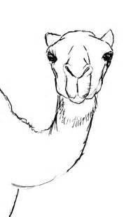Camel Head Drawing