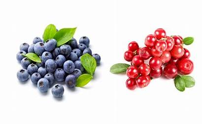 Blueberries Cranberries Urinary Tract Infection Immune Antioxidants