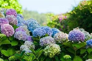 Pflanzen Für Raucher : pflanzen f r den herbst fetthenne 6 ~ Markanthonyermac.com Haus und Dekorationen