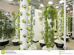 Urban Gardening Definition : urban garden stock photo image 44203642 ~ Eleganceandgraceweddings.com Haus und Dekorationen