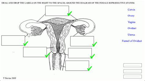 Kangaroo Anatomy Male Reproductive System