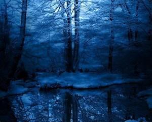 dark snowy forest - Pixdaus