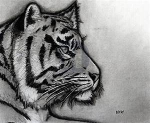 How To Sketch A Tiger  Step By Step  Drawing Guide  By