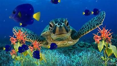 Turtle Sea Fish Underwater Flora Wallpapers13 1080