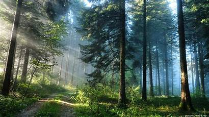 Forest Deep Desktop Mobile Wallpapers Nature