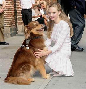 Amanda Seyfried cuddles her dog, Finn, in NYC (Photos