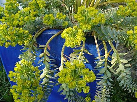 plante pour jardiniere exterieur plein soleil photos de conception de maison agaroth