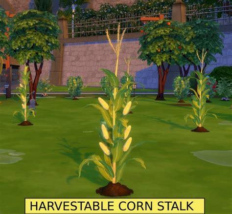 harvestable corn stalk optional popcorn popper