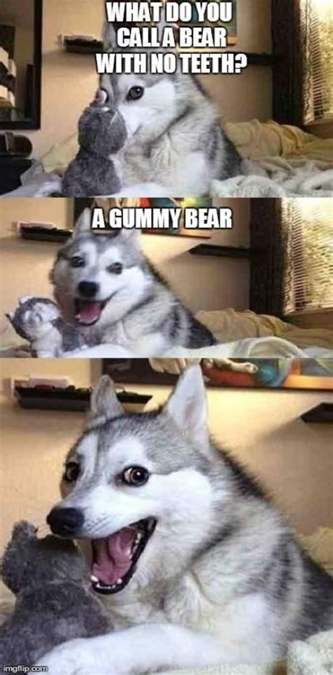 funny dog humor ideas  pinterest laughing dog