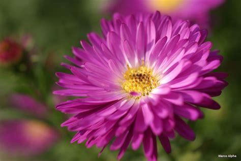 alle verschillende bloemen marco alpha fotografie bloemen uit eigen tuin