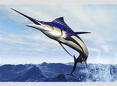 A Sleek Blue Marlin Bursts Photograph by Corey Ford