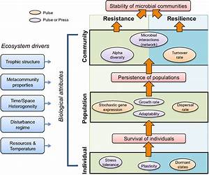 Frontiers | Fundamentals of Microbial Community Resistance ...