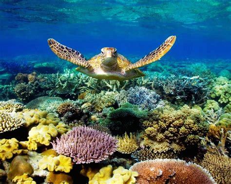 sea turtle swimming underwater scene  coral beautiful