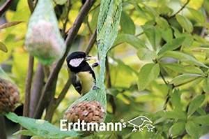 Graines De Tournesol Pour Oiseaux : graine de tournesol pour m sange notre comparatif pour ~ Farleysfitness.com Idées de Décoration