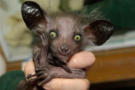 World's ugliest animals revealed (video) AOL UK Travel