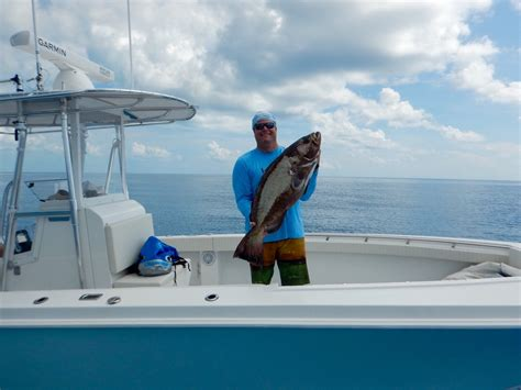 grouper gag diving deep lures catch