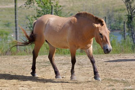 horse facts horses animal animals information lover foal cheval running interesting pregnant