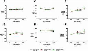 Serial Cardiac Function In Adult Male Kif6 Mutant Mice