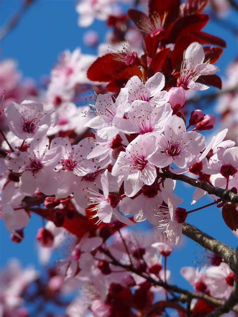 Free Images : tree branch fruit flower petal bloom