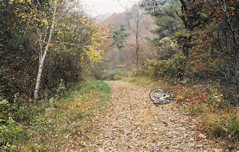 Wallpaper Bike, Autumn, Fog, Trees, Track, Forest Images