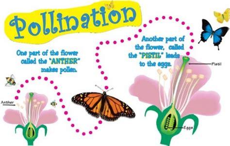 pollination  fertilization facts  kids