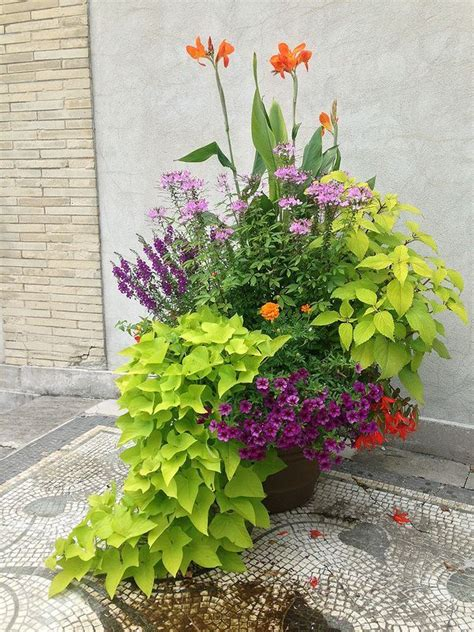 coleus container design 368 best images about coleus on pinterest scarlet fall containers and thrillers