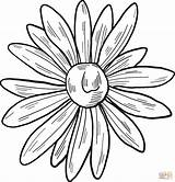 Coloring Daisy Printable sketch template