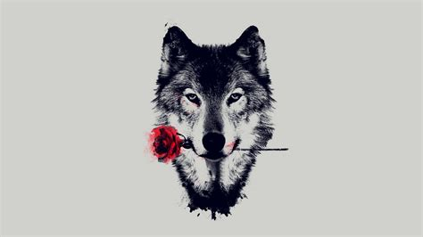 wolf wallpapers wolves and other amazing creatures in