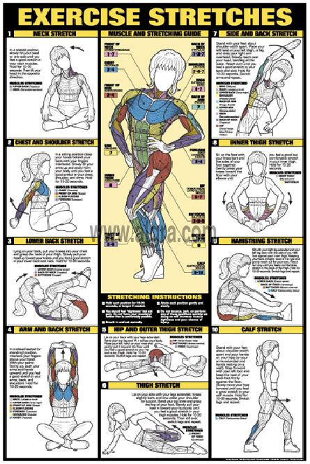Browse through the items below to view our full range of charts in this category. ExercThe Exercise Stretch Poster allows you to properly stretch in the comfort of your own home ...