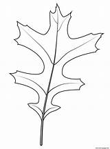Oak Leaf Coloring Pages Printable Prints sketch template