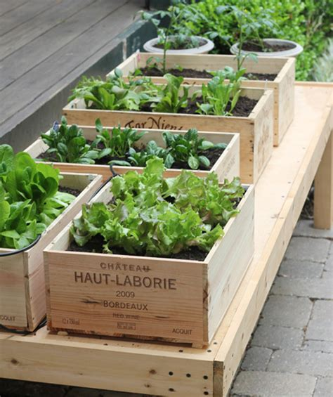 Small Space Gardening  How To Grow A Garden In Containers