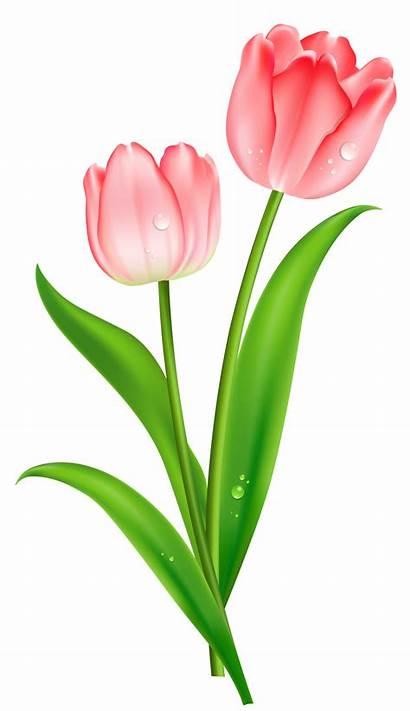 Clipart Tulips Clip Tulip Flower Bouquet Pink