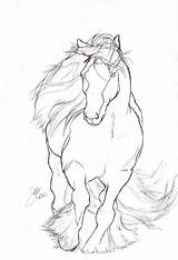 Drawing Horse Gypsy Vanner Drawings Easy Rearing Coloring Pages Contour Elipse Form Pferde Line Pencil Sketches Malen Tinker Getdrawings Animator sketch template
