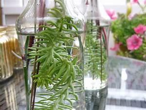 Pflanze In Flasche : kochen nach optik kochen nach optik ~ Whattoseeinmadrid.com Haus und Dekorationen