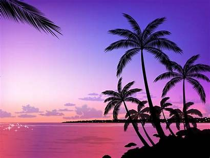Palm Tree Wallpapers Hdwallsource