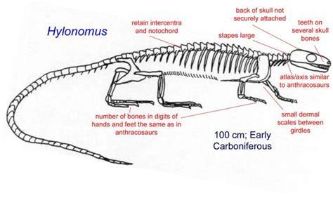 Komodo Dragon Labeled Diagram