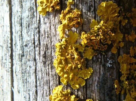 Yellow Mold Facts And Tips To Remove It  Clean Water Partners. Living Room Waterfall. Neutral Paint Colors For Living Room. Living Room Ceiling Lamps. Clearance Living Room Furniture Sets. Aarons Rental Living Room Furniture. Living Room On Main. Walnut Furniture Living Room. Living Room Ceiling