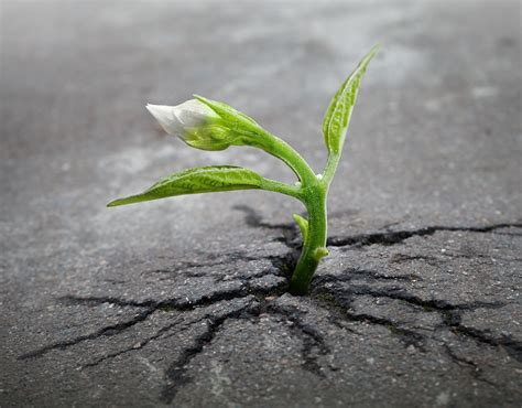 where do flowers grow free photo sprout plant growing asphalt free image on pixabay 1147803