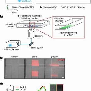 (PDF) A microfluidic device for measuring cell migration ...