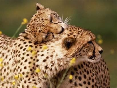 Animals Wallpapers Bing Archive Amazing Wallpapersafari