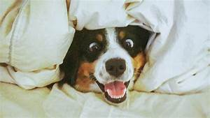 Funniest 🐶 Dogs and 😻 Cats - Awesome and Funniest Animals ...