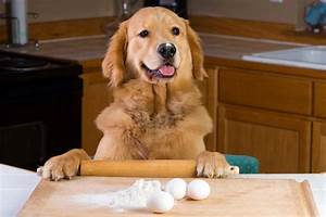 7 Homemade Dog Food Treat Recipes For The Holidays Dogtime