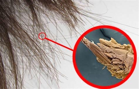 haare trocken und strohig hausmittel gegen extrem trockene haare njuskam