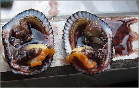 qui cuisine piangua manglar anadare tuberculosa aperta flickr