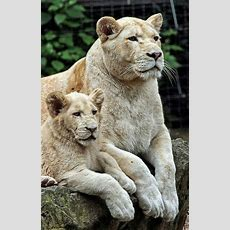 5048 Best Images About A Wild Animal On Pinterest